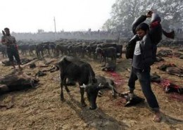 Why Hinduism (Gadhimai Hindu Festival) encourages the brutal killing of animals?
