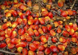 Will palm oil prices touch the 3000 ringgit or would it stay below by all means?